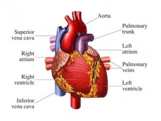 Cardiac Symptoms